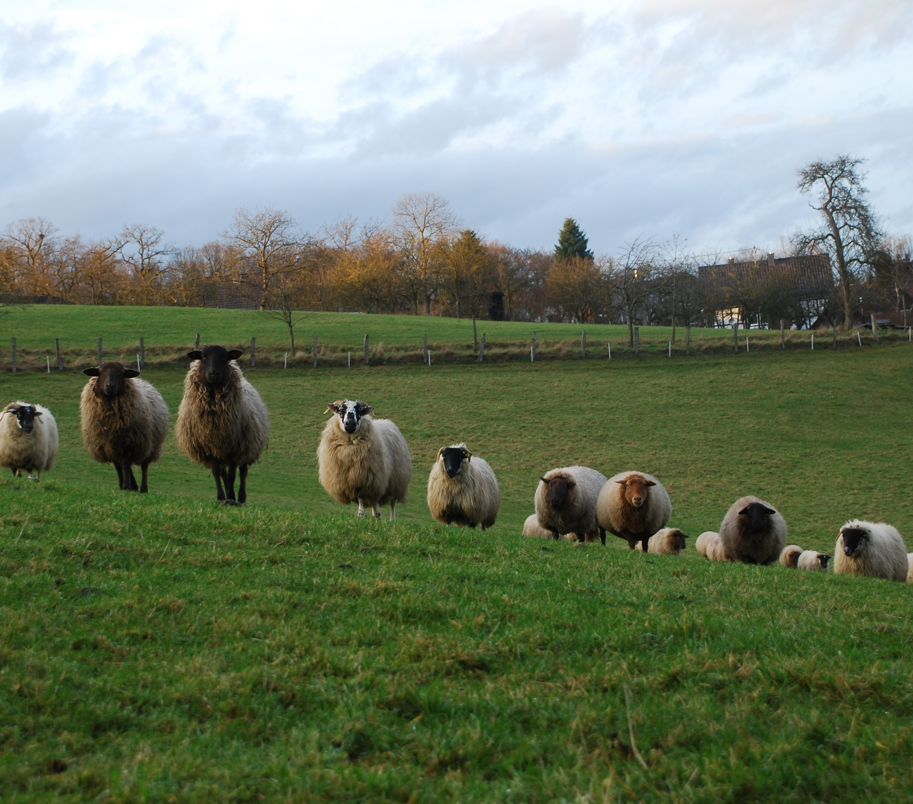 Sheep Hill Farm