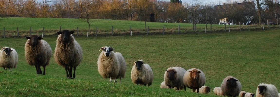 Sheephillfarm